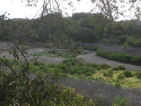 Malibú, CA: by the pond