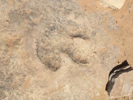 Castle Dale, UT: Dinosaur Track