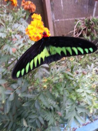 Copthorne Hotel Cameron Highlands: butterfly farm