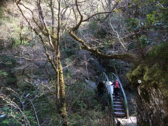 Devil's Bridge (Pontarfynach), UK: Devil's Bridge Falls