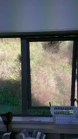 Kiwi Paka: IMG-20160421-WA0010_large.jpg