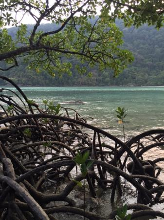 Khuraburi, تايلاند: Mangroves on the Koh Surin