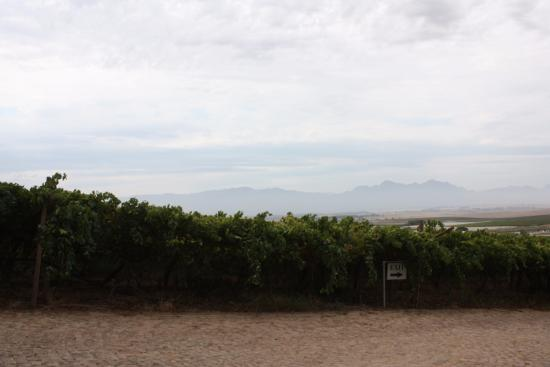 Riebeek Kasteel, Afrika Selatan: View from the front door. You will want to come back here!