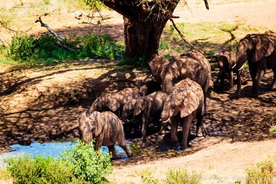 Il Ngwesi Lodge: You can see all sorts of wildlife come to the watering hole from the rooms.