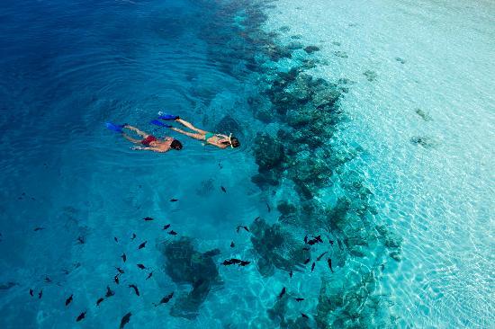 Vilamendhoo Island Resort & Spa: Snorkeling