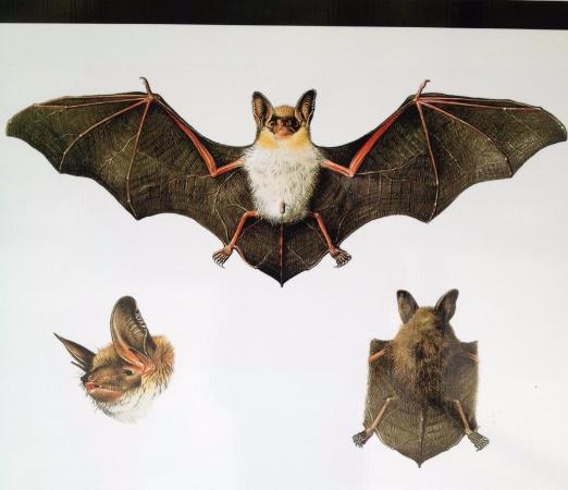 Foto de grotte di collepardo collepardo torrente fiume - Contorno immagine di pipistrello ...