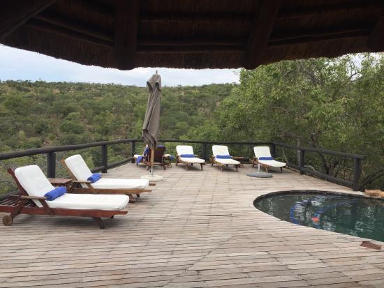 Tshwene Lodge: Pool by the trees