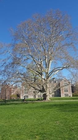 vassar tree note the bench and person to get a real feel of the rh tripadvisor com