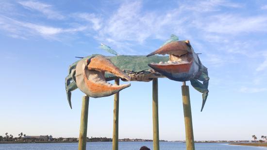 Rockport, تكساس: blue crab