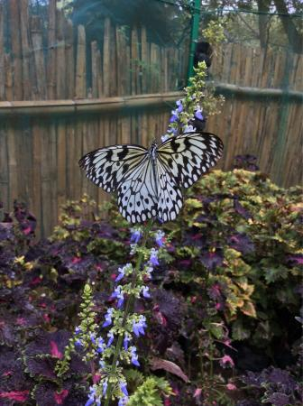 """Butterfly Sanctuary at Mambukal Resort : """"Captured!"""""""
