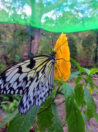 """Butterfly Sanctuary at Mambukal Resort: """"Captured!"""""""