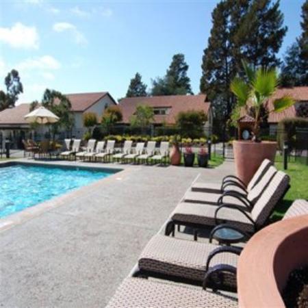 Chaminade Resort & Spa: Pool View