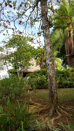 Bosque del Cabo Rainforest Lodge: Bosque de Cabo