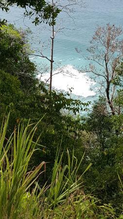 Bosque del Cabo Rainforest Lodge: Bosque de Cabo
