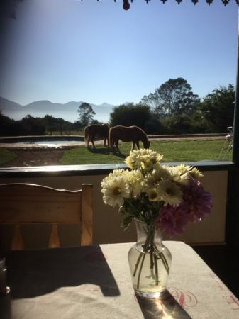 Outeniqua Moon Percheron Stud and Guest Farm: Breakfast with a view, the mini horses often join guests on the patio.