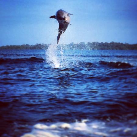 Isla San Cristobal, Panama: Dolphin jumping