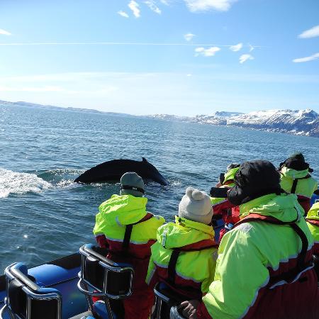 Gentle Giants Whale Watching: Deep dive RIB
