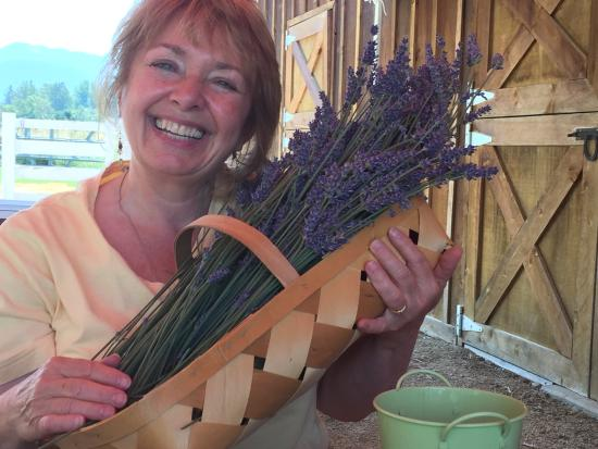 Lavender Fields Forever: Fun !!