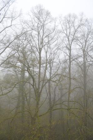 Budenheim, Tyskland: View from the window on a foggy morning. You can also hear the birds!