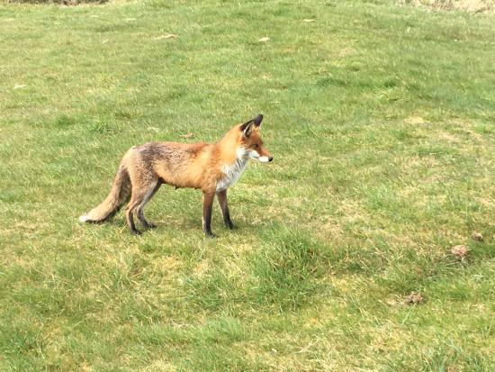Drogheda, Ireland: Seapoint Fox