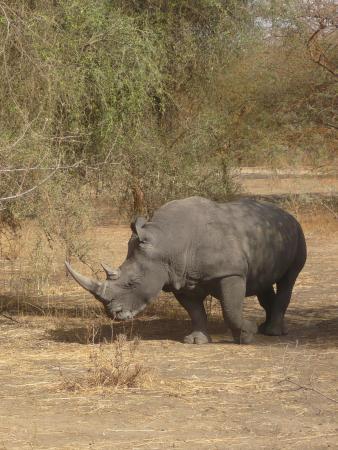 La Petite Cote, Senegal: 2 rhinoceros dans la réserve