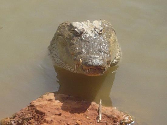 La Petite Cote, Senegal: le sourire du croco
