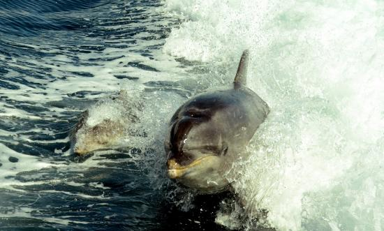 Arthurs Bay, Neuseeland: Dolphin Action Mother And Baby