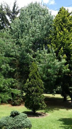 Jardin Botanico Jose Celestino Mutis - Picture of Jardin Botanico ...