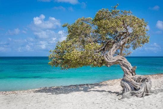 La Cabana Beach Resort & Casino: Beachfront hotel