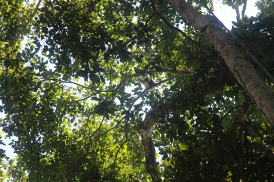 Khao Yai National Park, تايلاند: In search of Gibbons!
