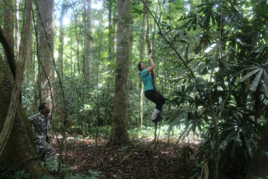 Khao Yai National Park, تايلاند: Taking a little respite to play in the trees, Tarzan style
