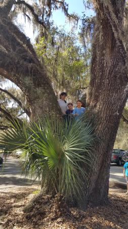 De Leon Springs, FL: Large Spreading Live Oaks give the park a distinctly Southern Charm