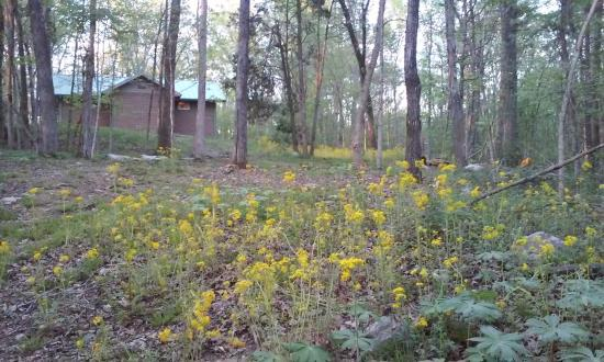 Chapel Hill, TN: Spring wildflowers at Henry Horton State Park