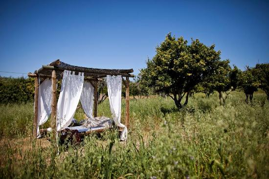 Naturarte Campo: Cama laranjal