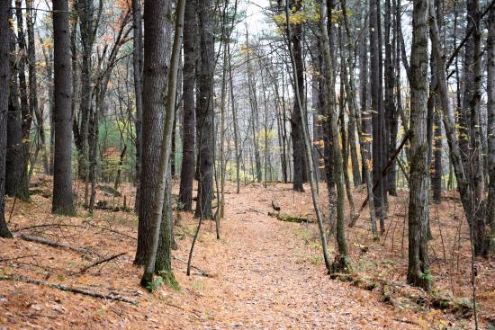 Callahan State Park Bild