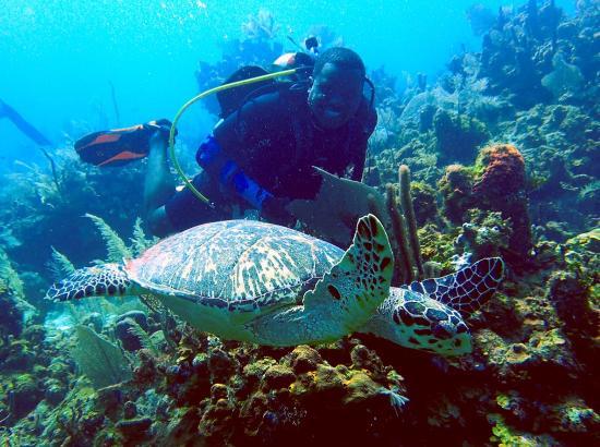 Turneffe Island, Belize: A diver's dream