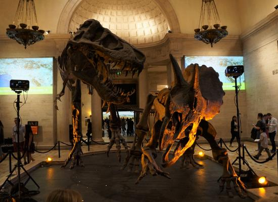 duel of t rex and tricerotops picture of natural history museum of rh tripadvisor co za