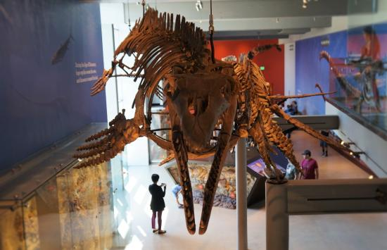 cute mosasaurus picture of natural history museum of los angeles rh tripadvisor com