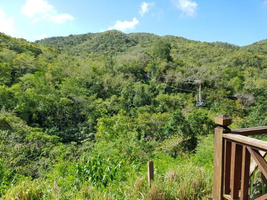 Antigua Rainforest Canopy Tour: Part of the zip line tour