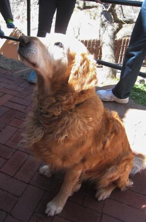 มานิโตสปริงส์, โคโลราโด: Chip the Castle Dog