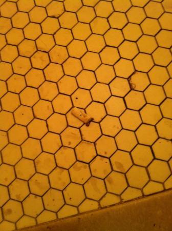 Hotel Monte Vista: Fag-end on the floor