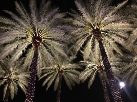 love the palm trees lit up picture of fairmont scottsdale princess