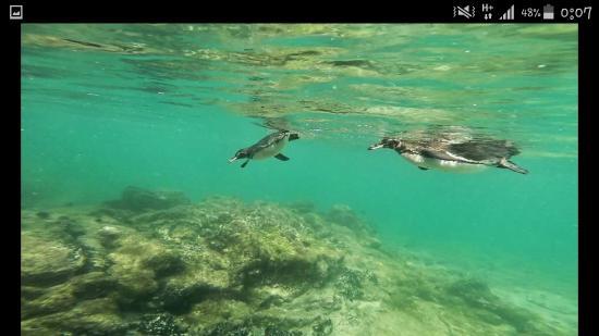 Puerto Villamil, Ecuador: Screenshot_2016-04-18-00-07-56_large.jpg