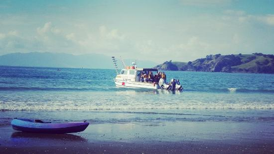 Isla Waiheke, Nueva Zelanda: Punters getting their toes wet on a shore transfer