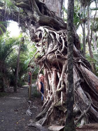 Piha, Nowa Zelandia: On the way to kitekite falls