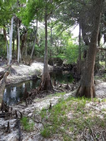 Cullum's Bonita Trail
