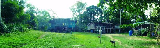 Sukau, Malaysia: Homestay