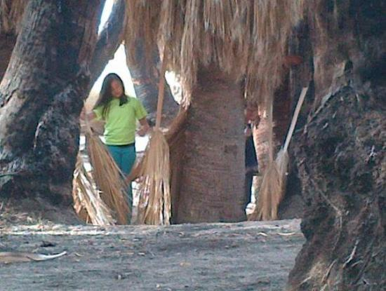 29 Palms Inn: The oasis. Palm fronds about to be assembled into a fort.