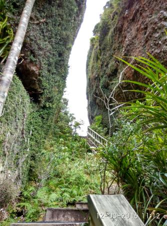 Whangapara, New Zealand: windy canyon on the way to mt hobson