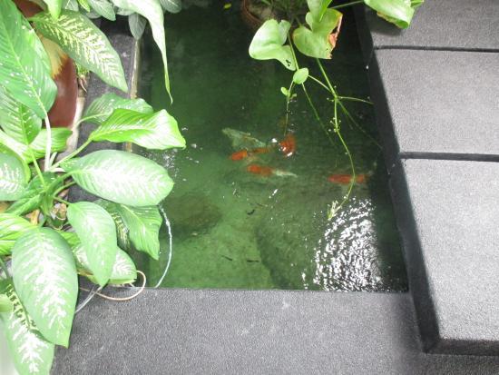 Laem Set, Tailandia: Fish pond